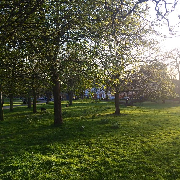 On the old course of the New River on a golden Spring evening in Clissold Park