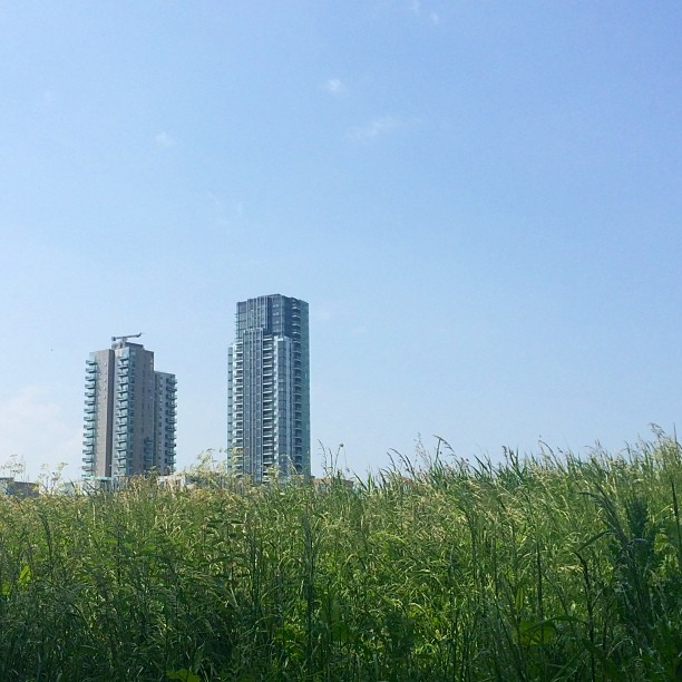 High rises next to the East Reservoir, Stokey