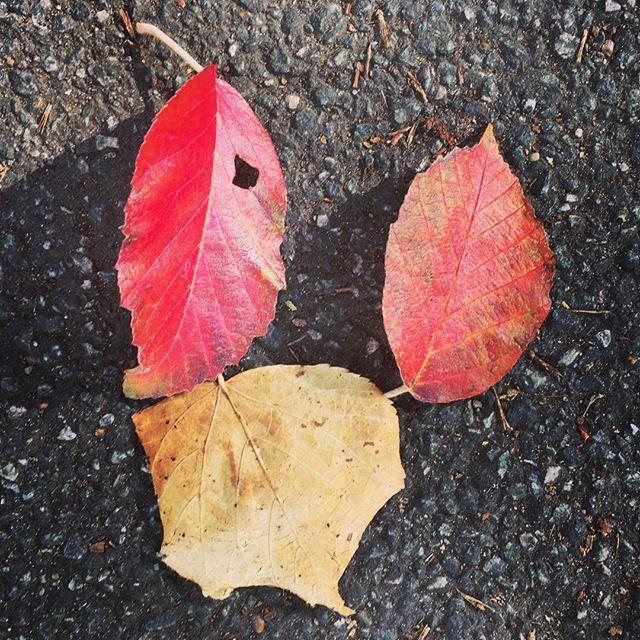 Autumn in Highbury Fields