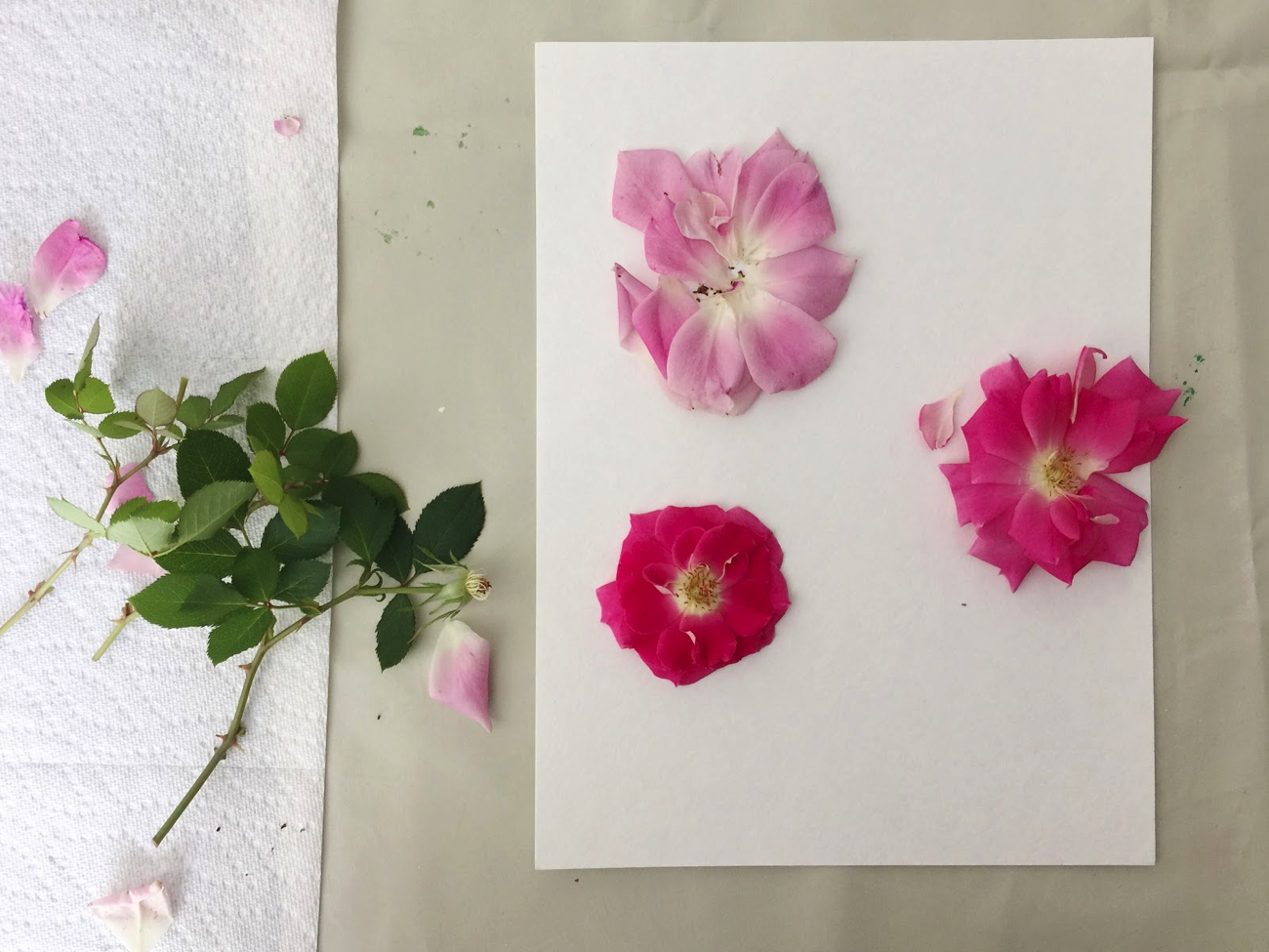 DIY_floral_relief-2.png