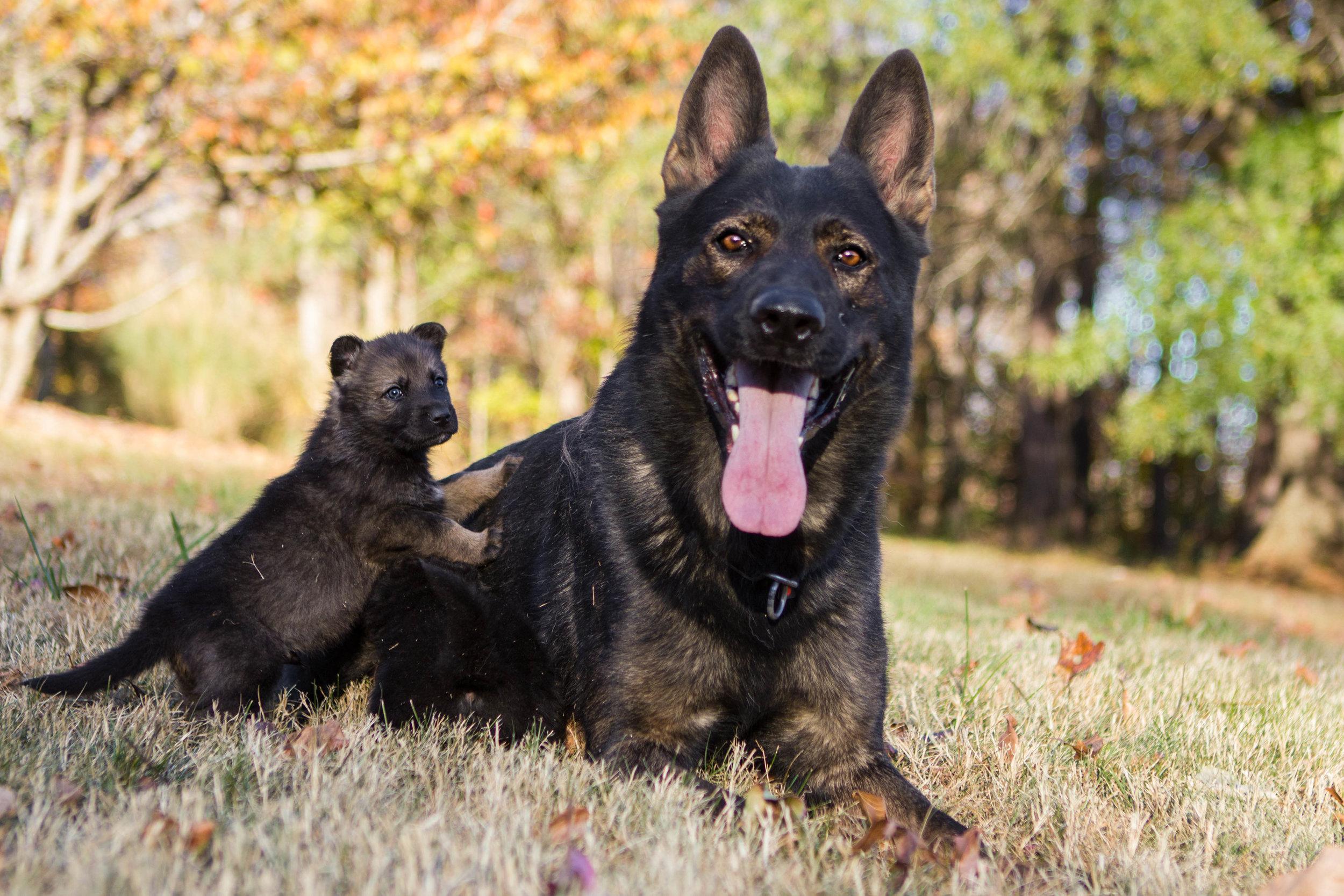 Ayk with Puppies-1.jpg