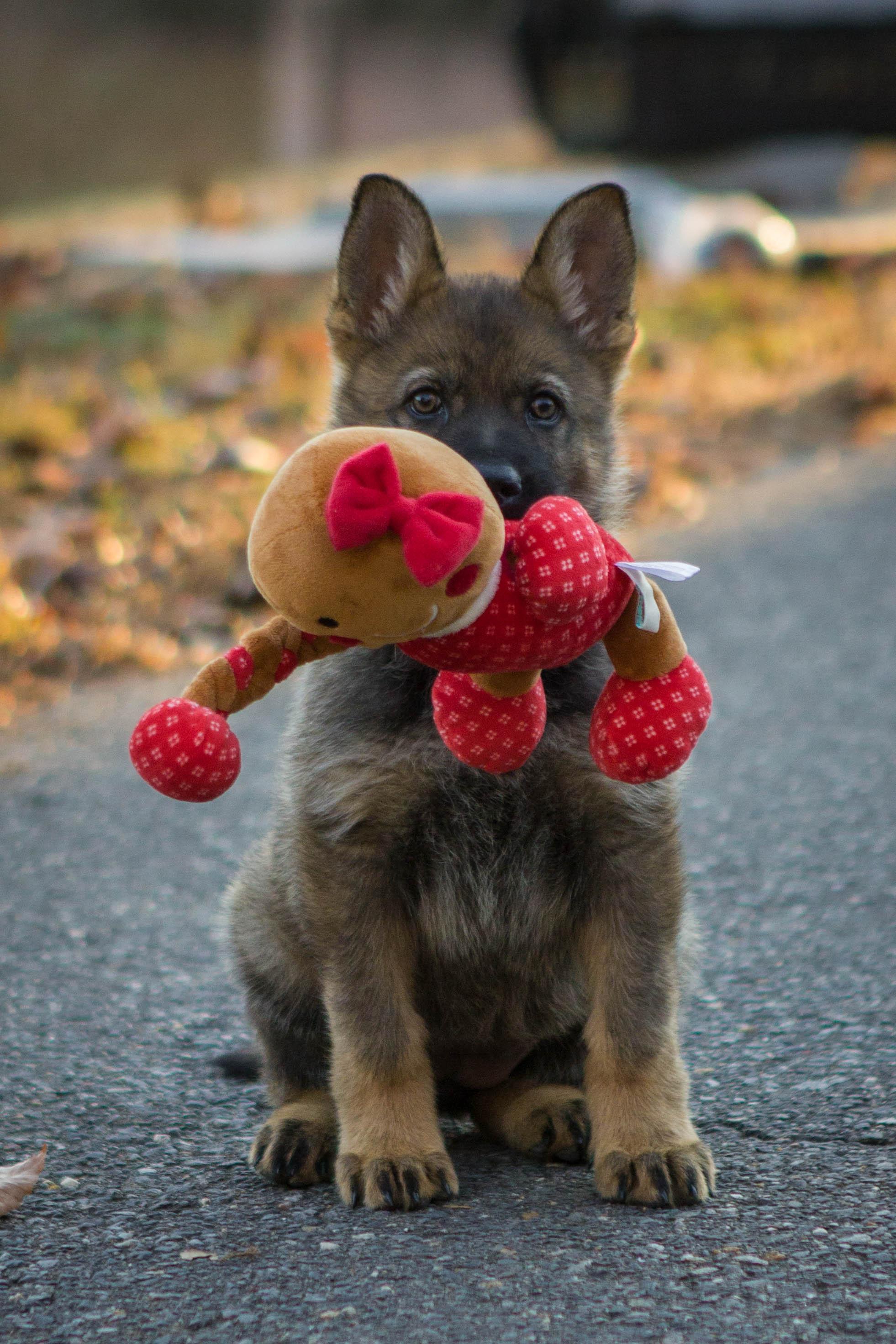 H Puppy-13.jpg