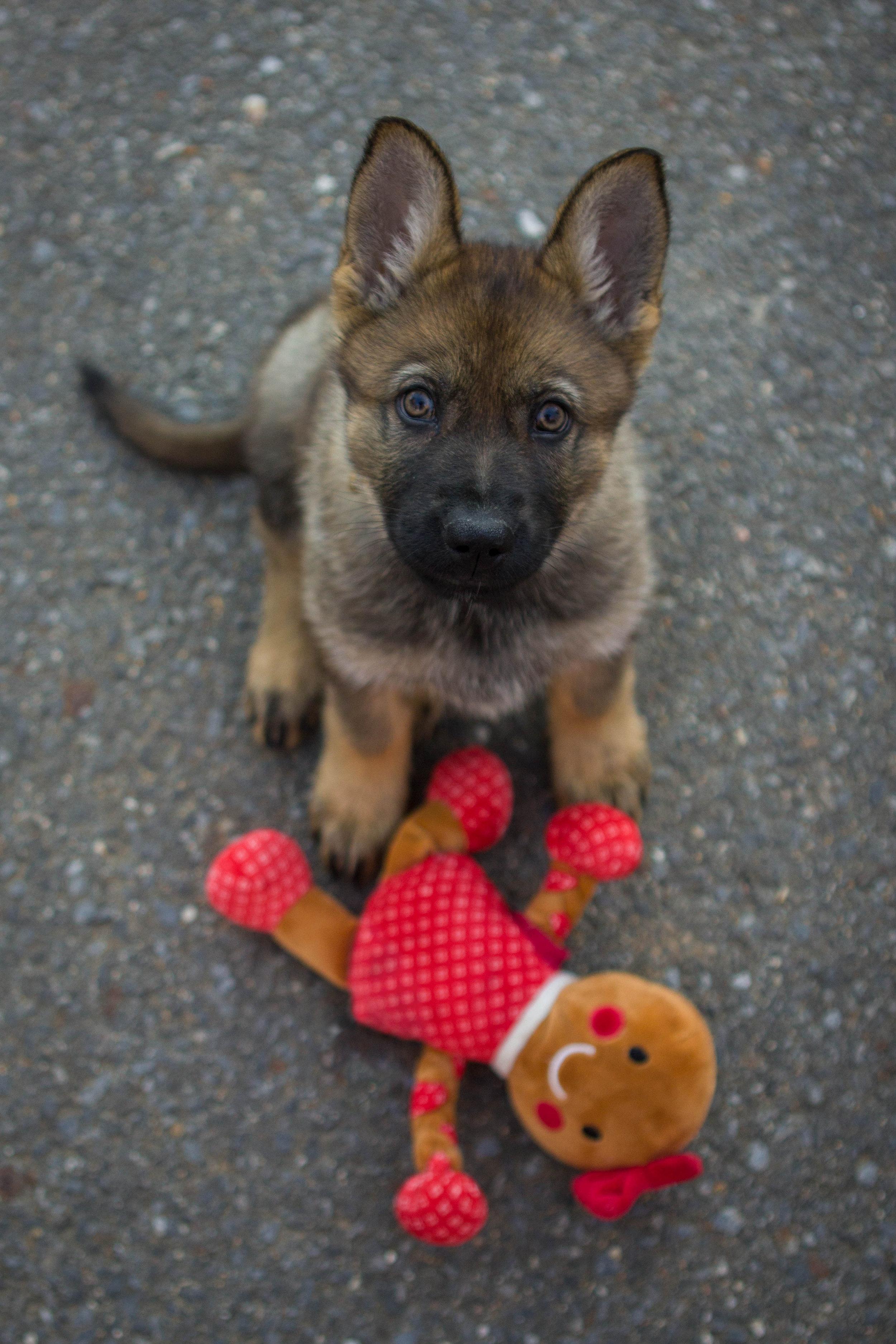 H Puppy-16.jpg