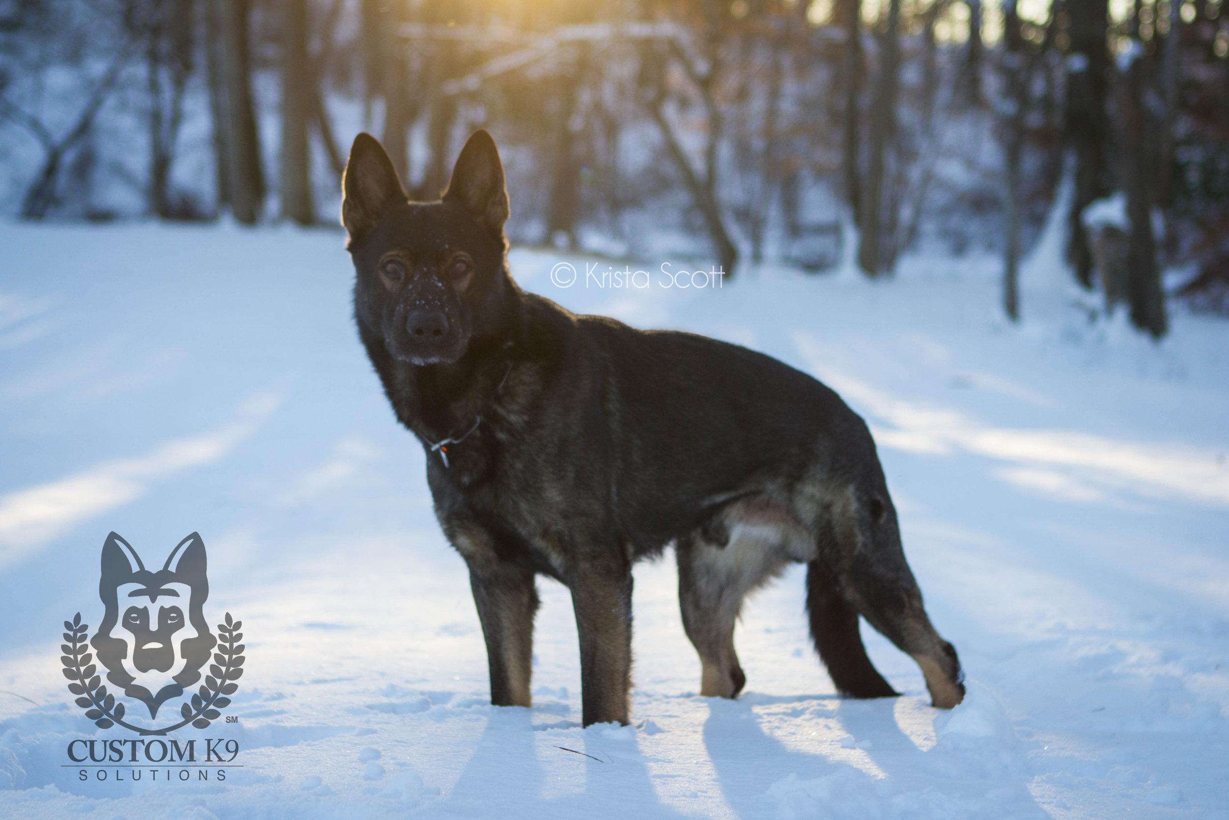 Ayk Snow-24.jpg
