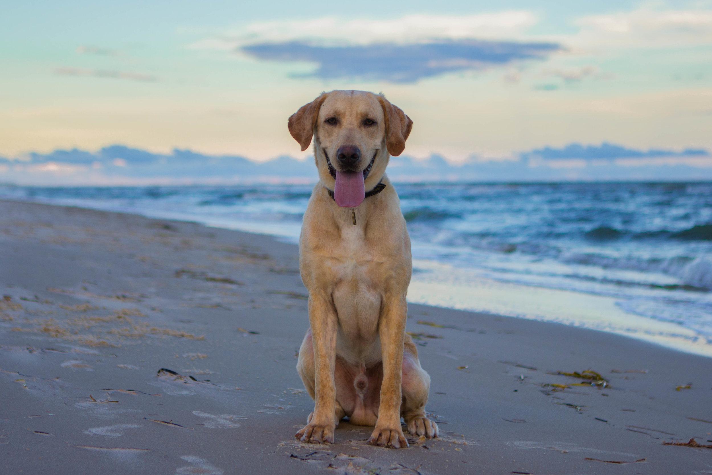 Remi Beach-3.jpg