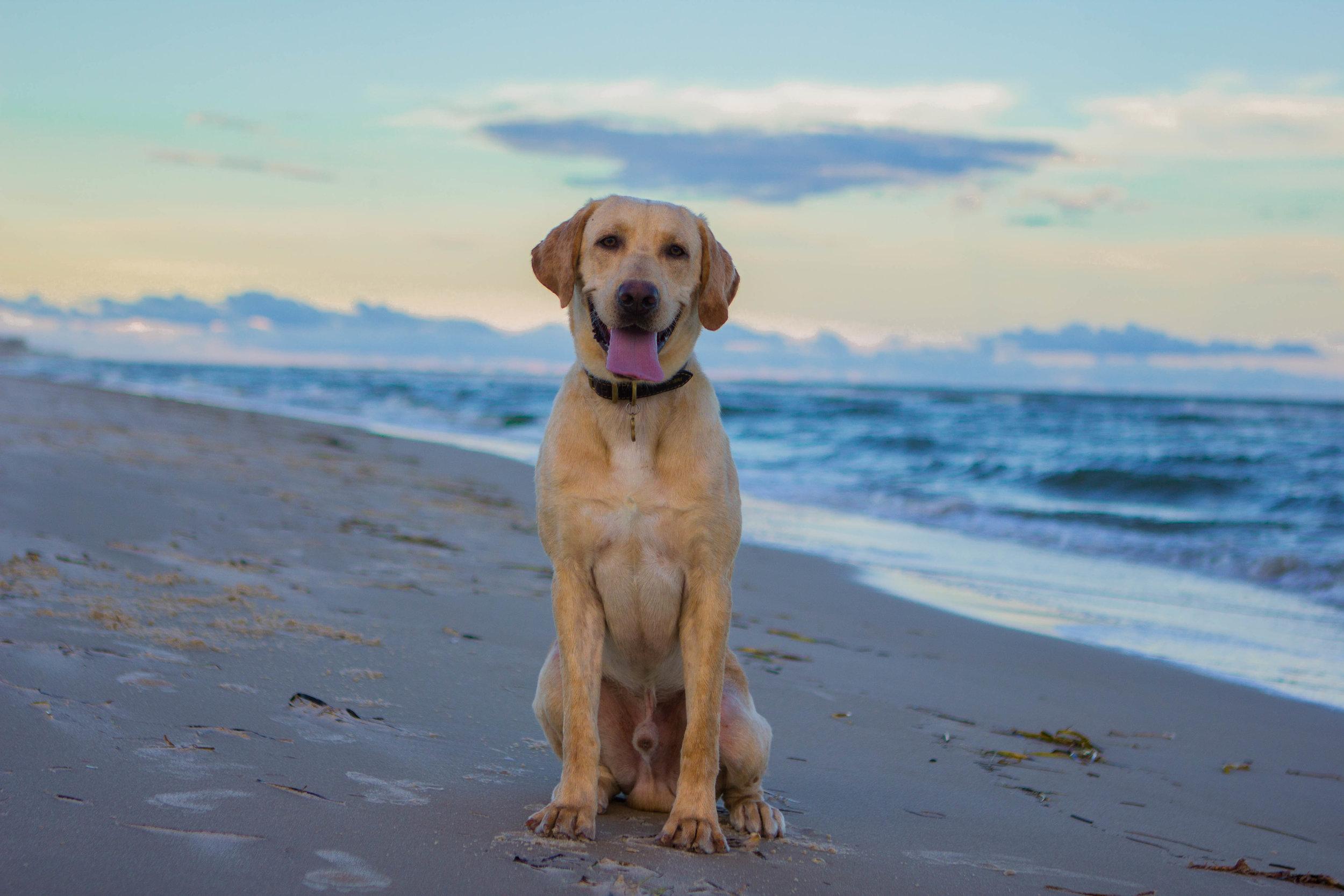 Remi Beach-4.jpg