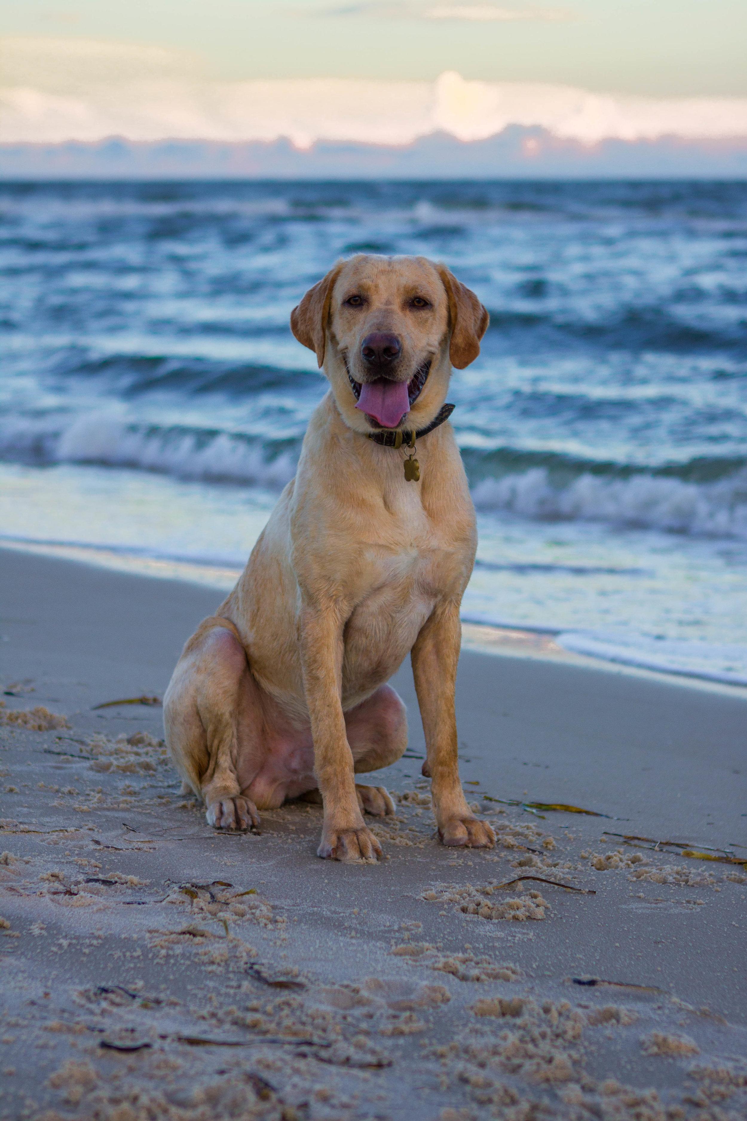 Remi Beach-5.jpg