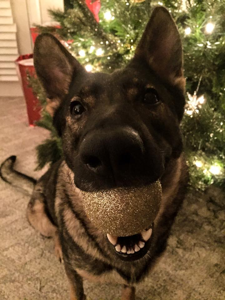 Karma holding a tree decoration.