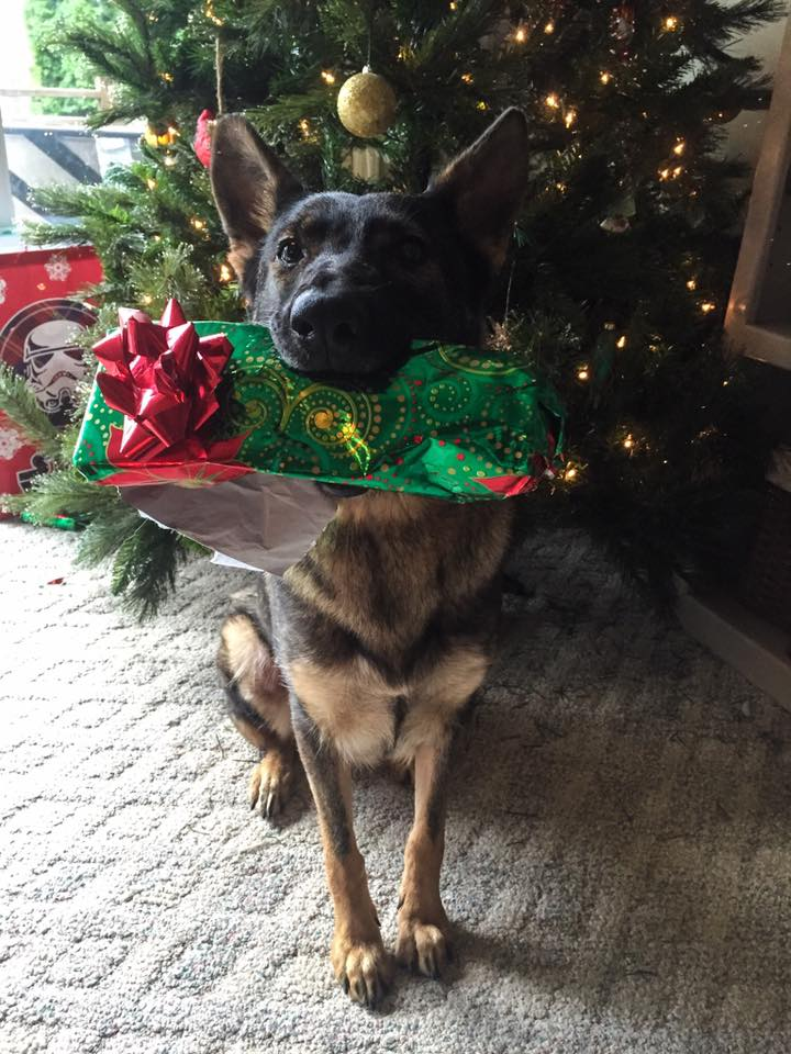 Karma and her Christmas Gift.