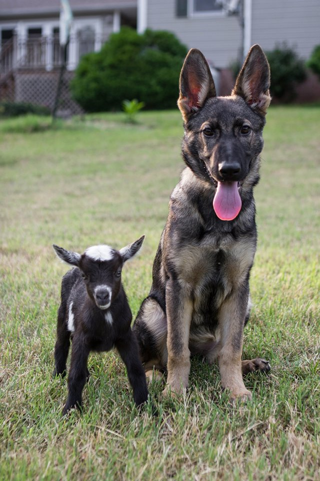 Karma around 4 months old with one of our kids.