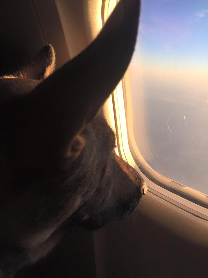 Karma in flight with me to the Arizona.