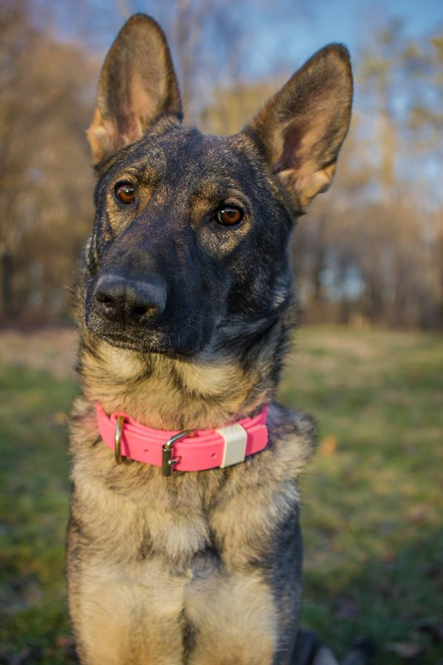 Karma at home.