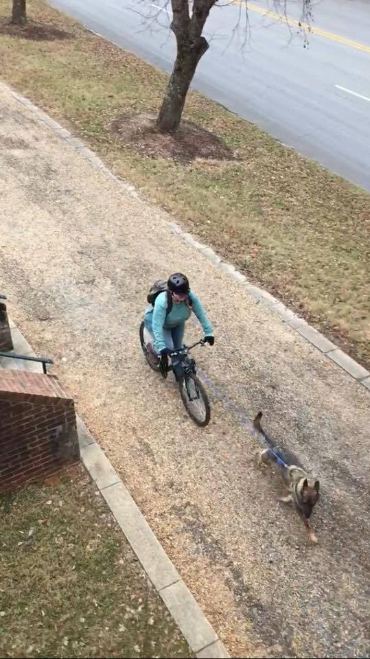 Karma and me bikejoring in Historic Downtown Old Salem.