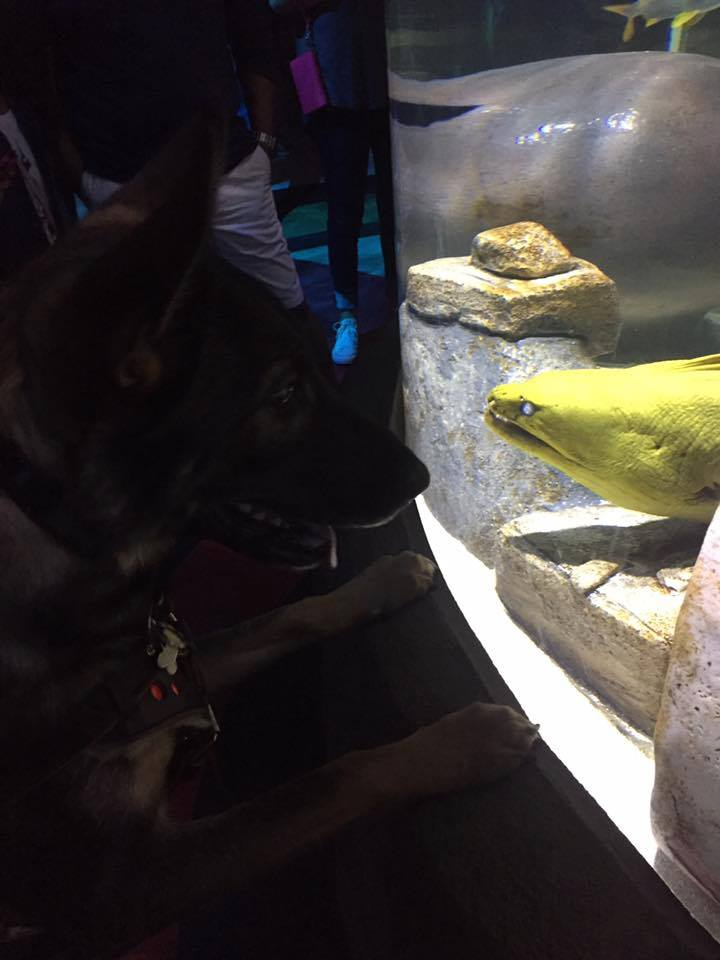 I made Karma say hello to an eel just to make sure she wouldn't actually say hello.
