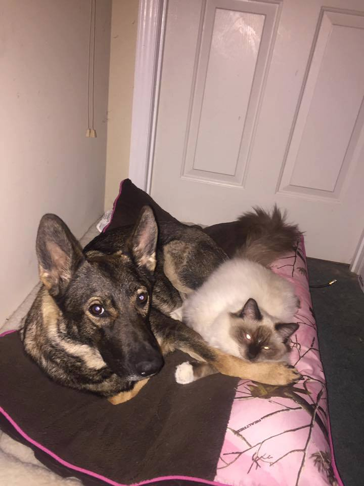 Snuggle Buddies. Actually I think I caught them playing after bedtime.