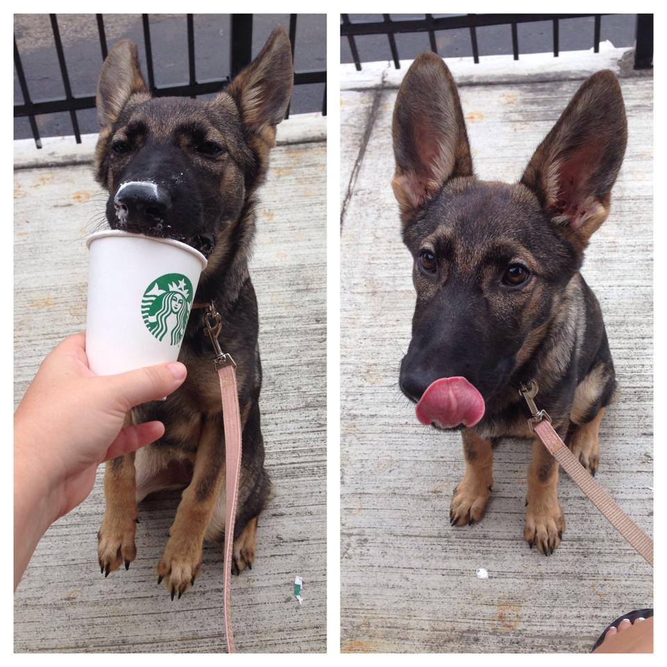 Karma as a baby with her first pupaccino.