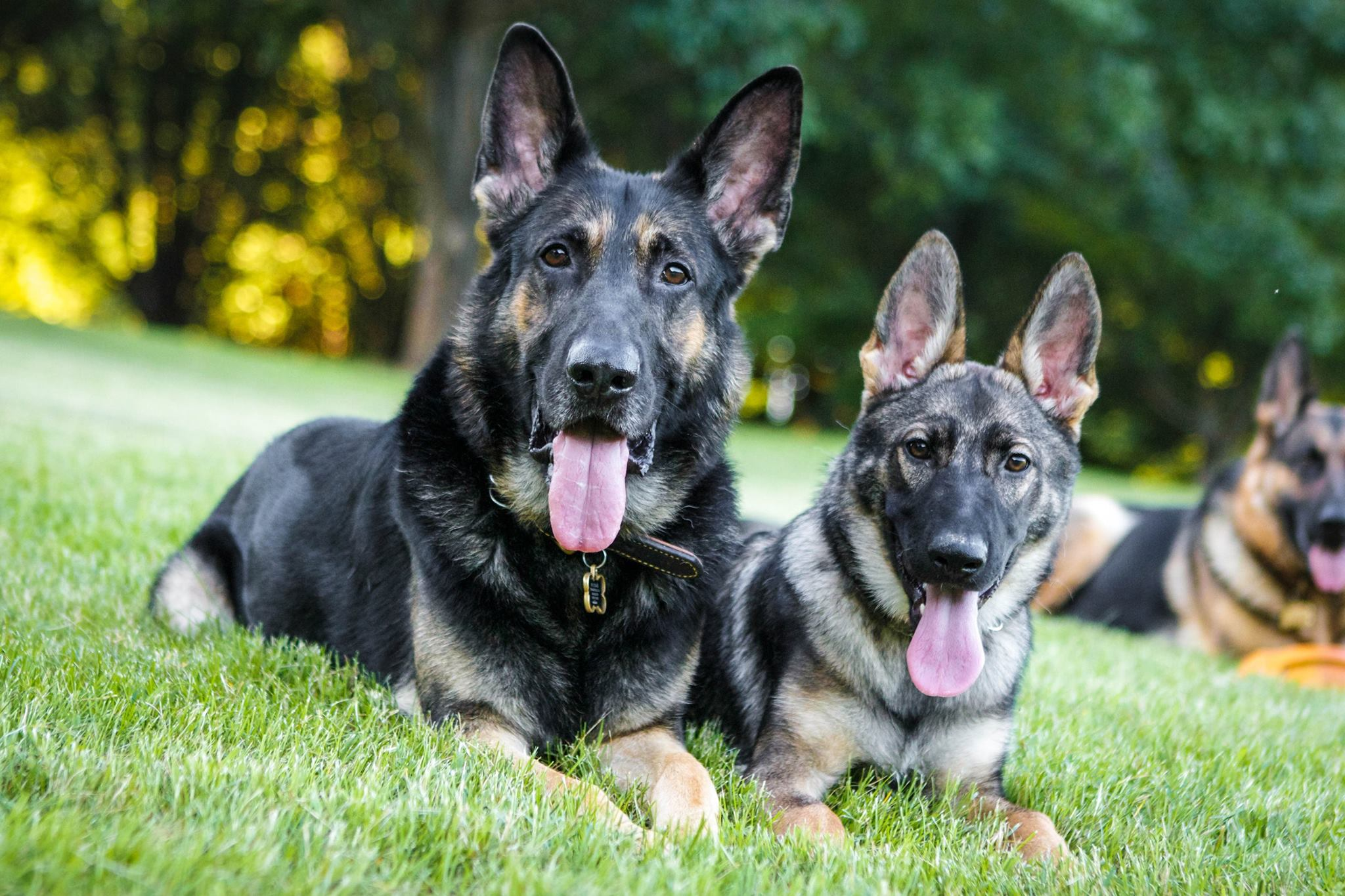 Karma at about 4 months old.