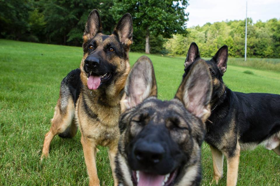 Karma photo bombing.