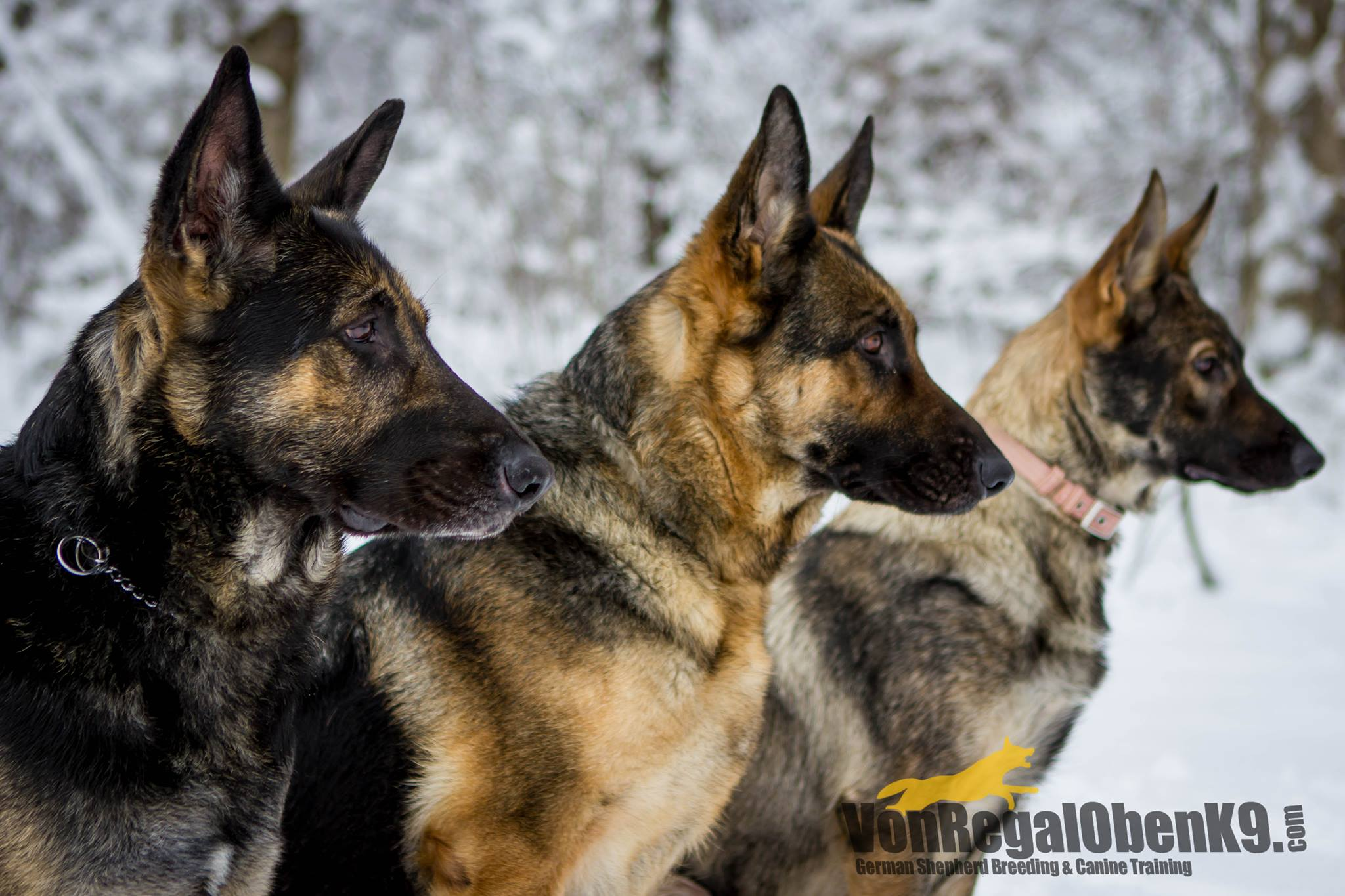 Jonas, Lacy, and Puppy Karma