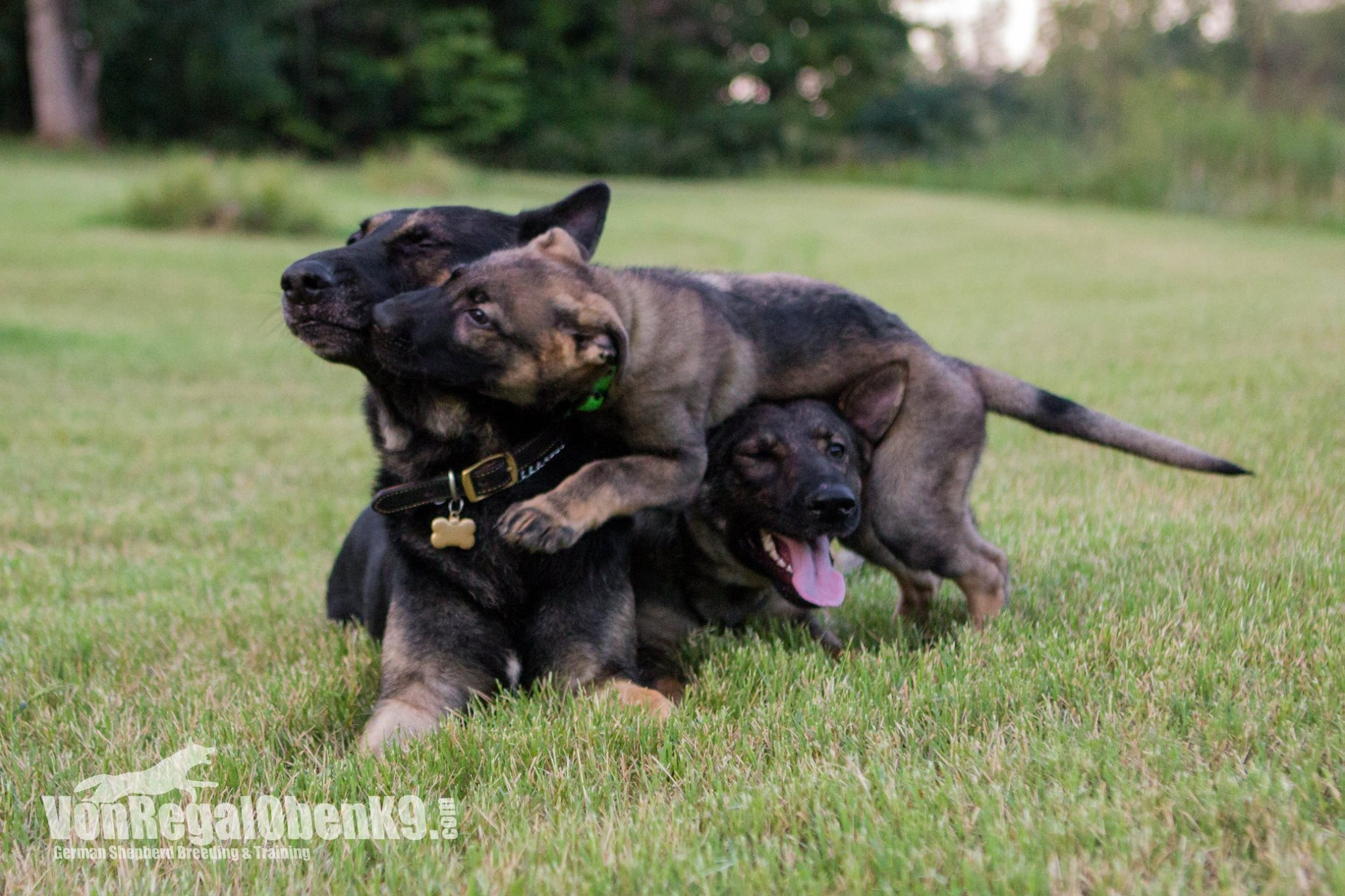 Karma, Jonas, and their puppy Banjo.