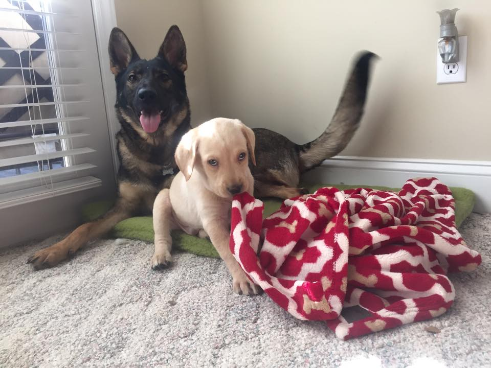 Karma and baby Remington.