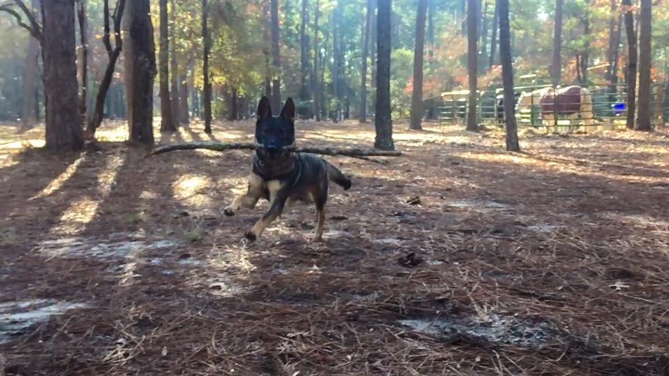 Karma making due with the biggest stick she could find.