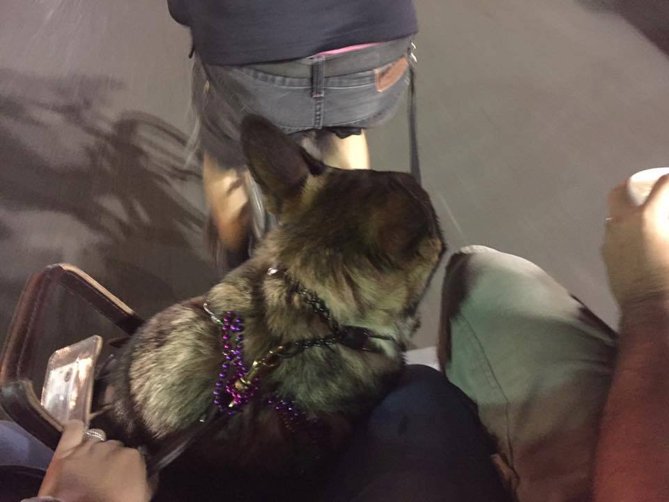 Karma, me, and Sean on a Rickshaw in New Orleans LA