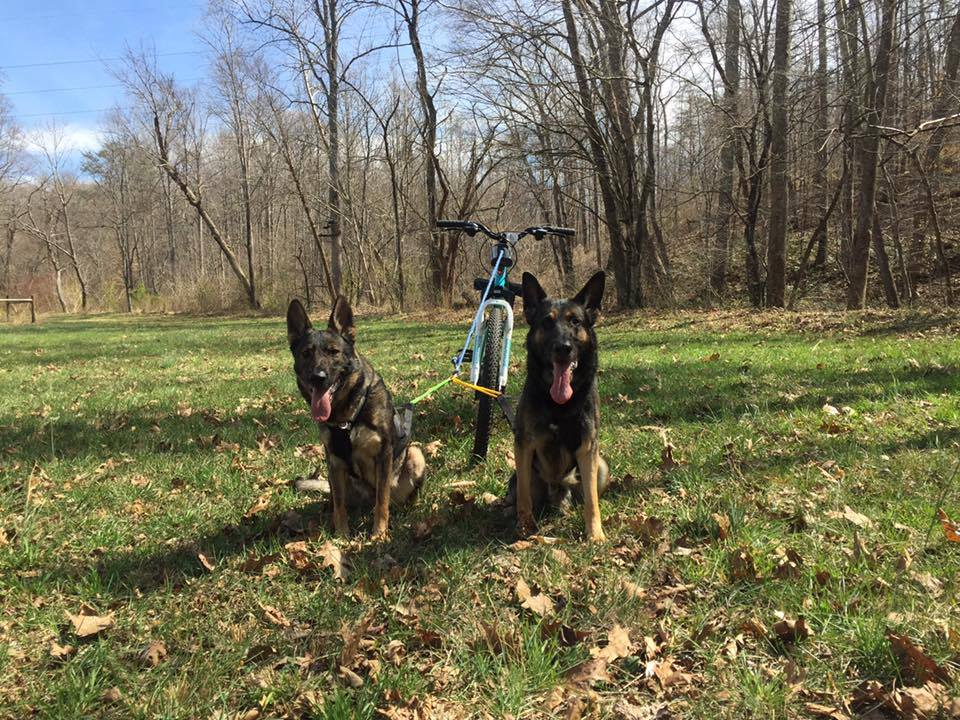 Karma teaching Jonas to mush