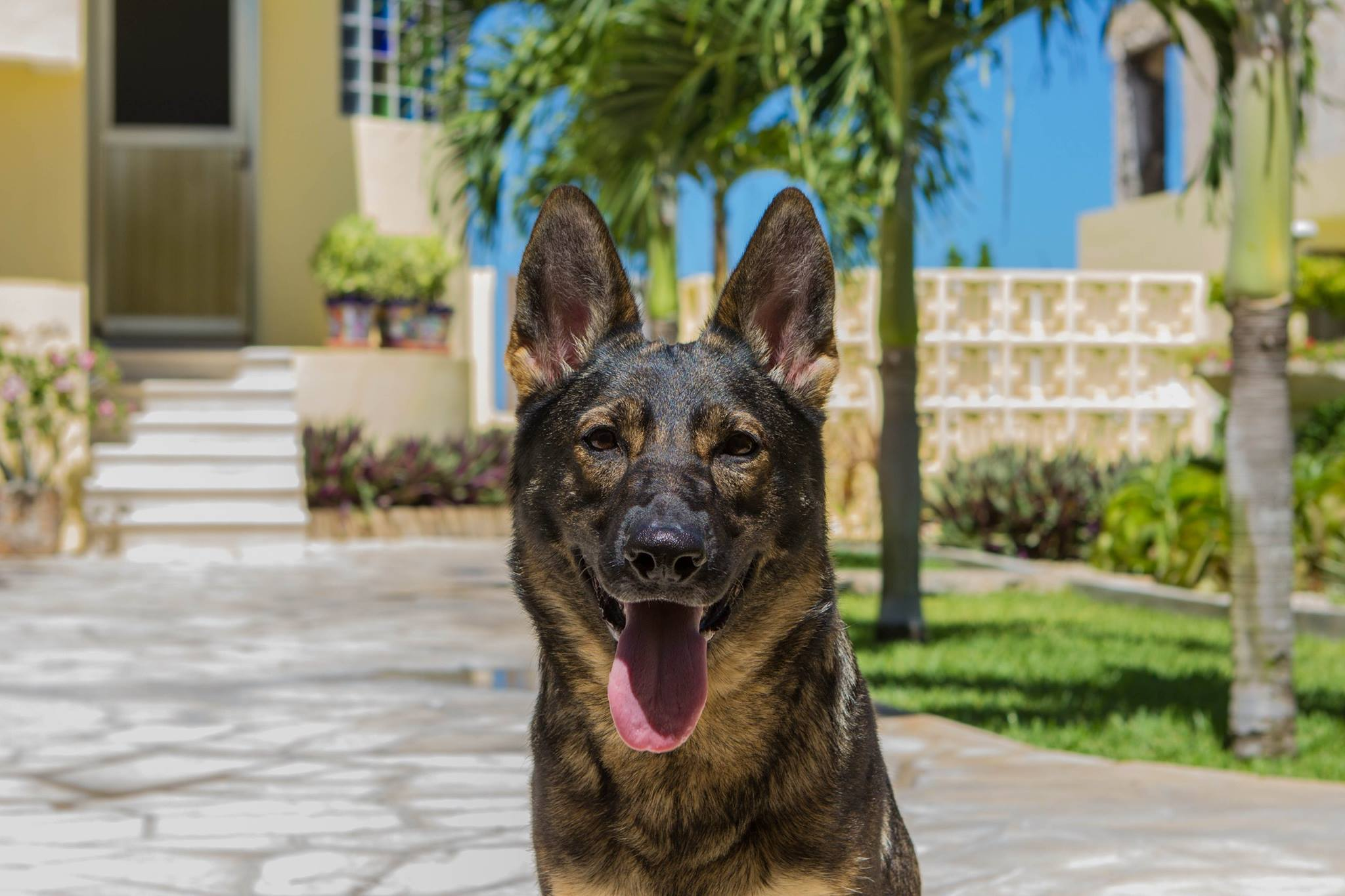 Karma on vacation in Mexico