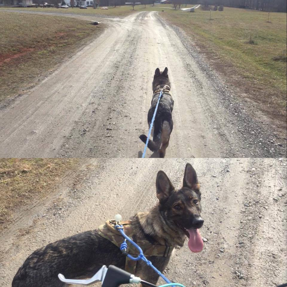 Bikejoring in my neighborhood