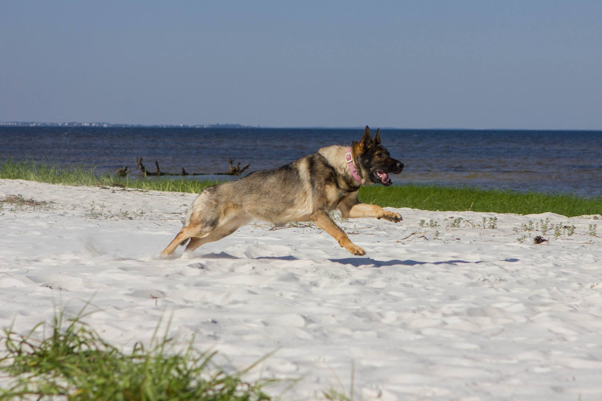 Karma on a trip with me visiting family in FL
