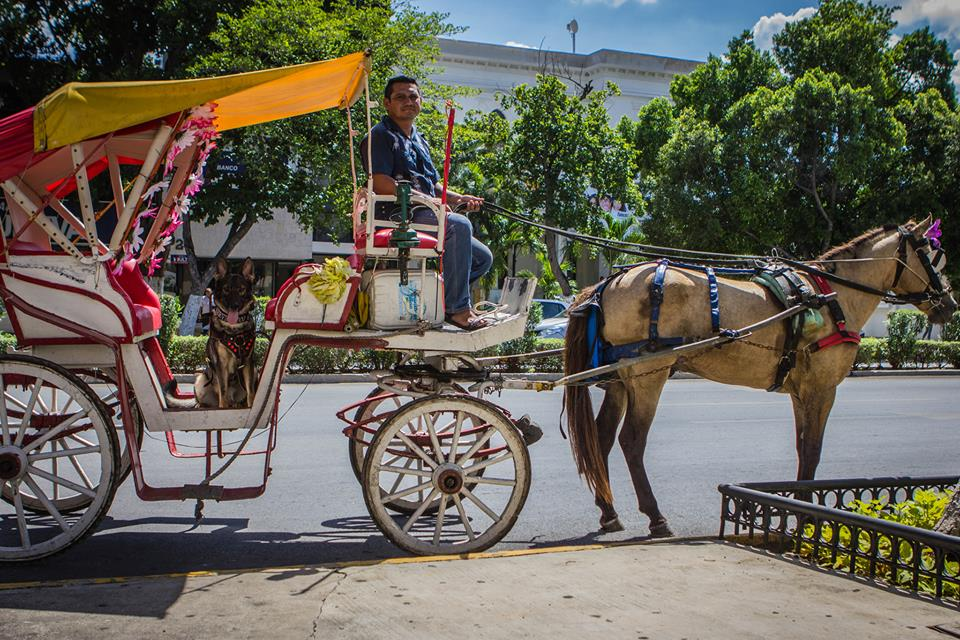 Karma waiting to exit the carriage after our ride around Merida Mexico.