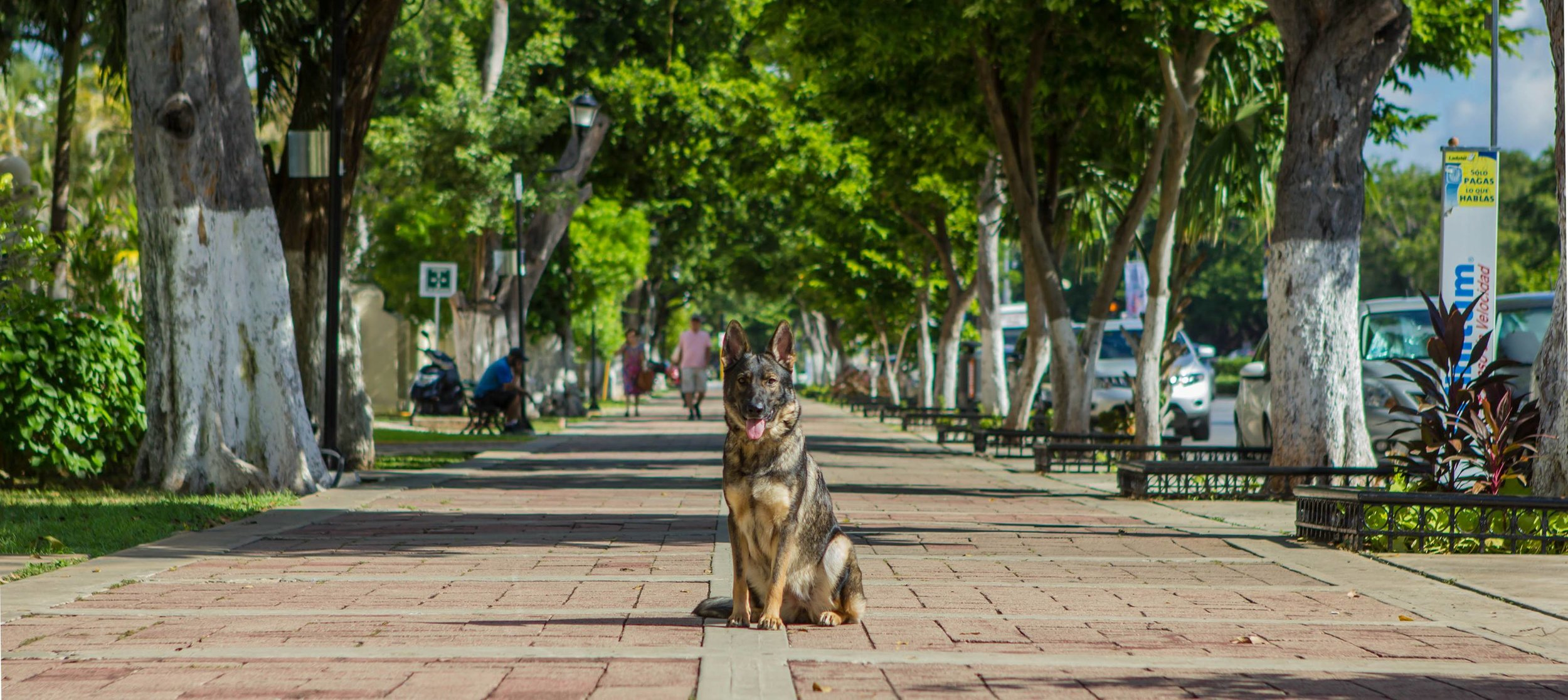 Downtown Merida Mexico.