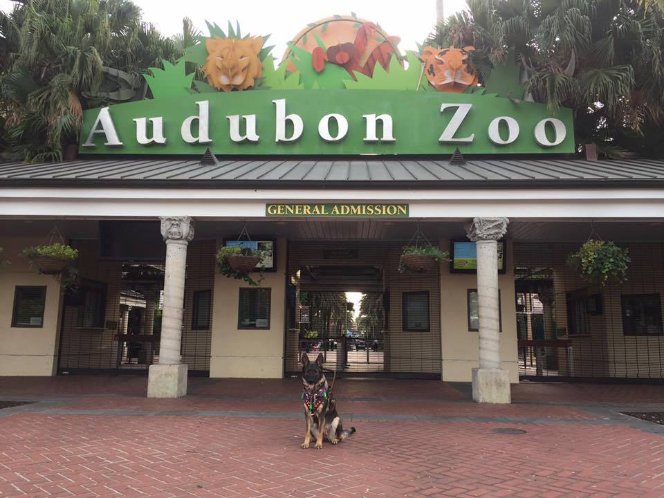 Karma posing outside the zoo. Waiting on Uber.