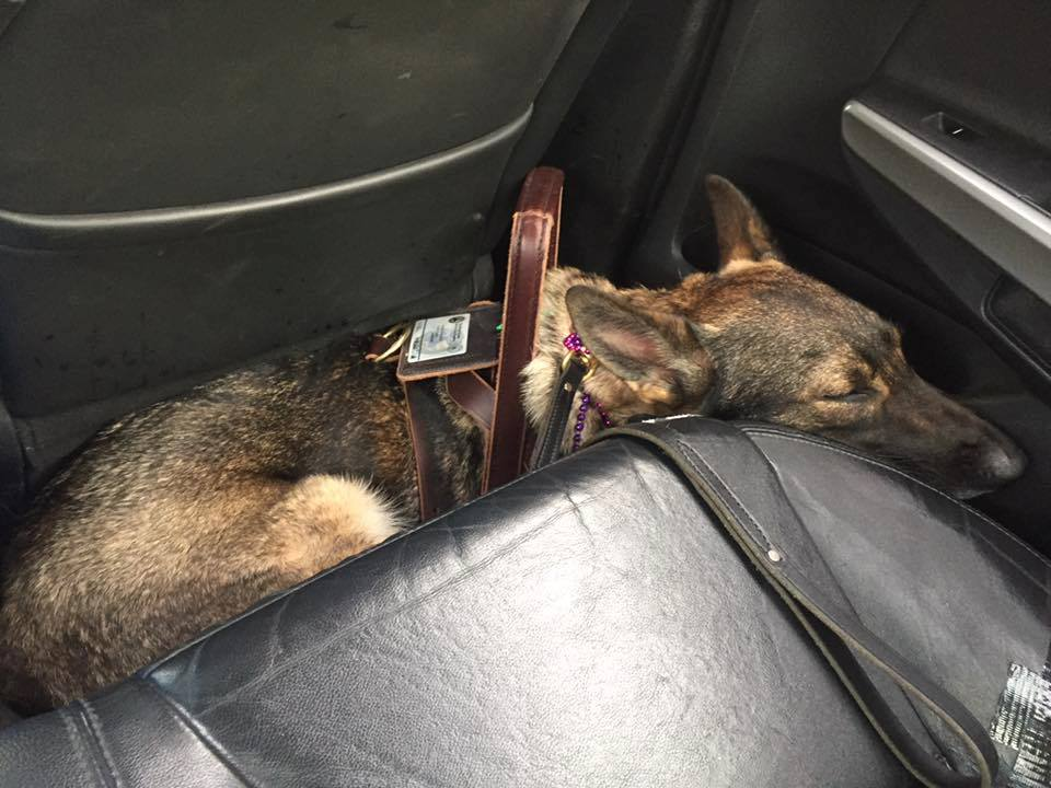 Karma taking a quick nap in the Uber.