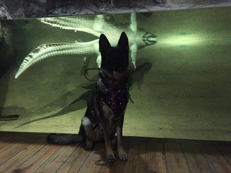 Karma posing at the aquarium