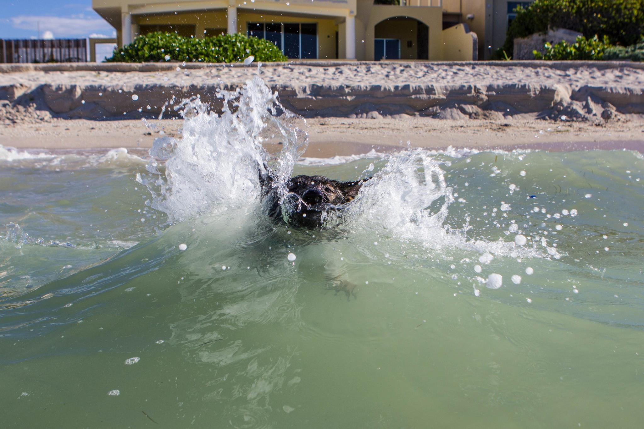 Karma coming out to see me in the surf