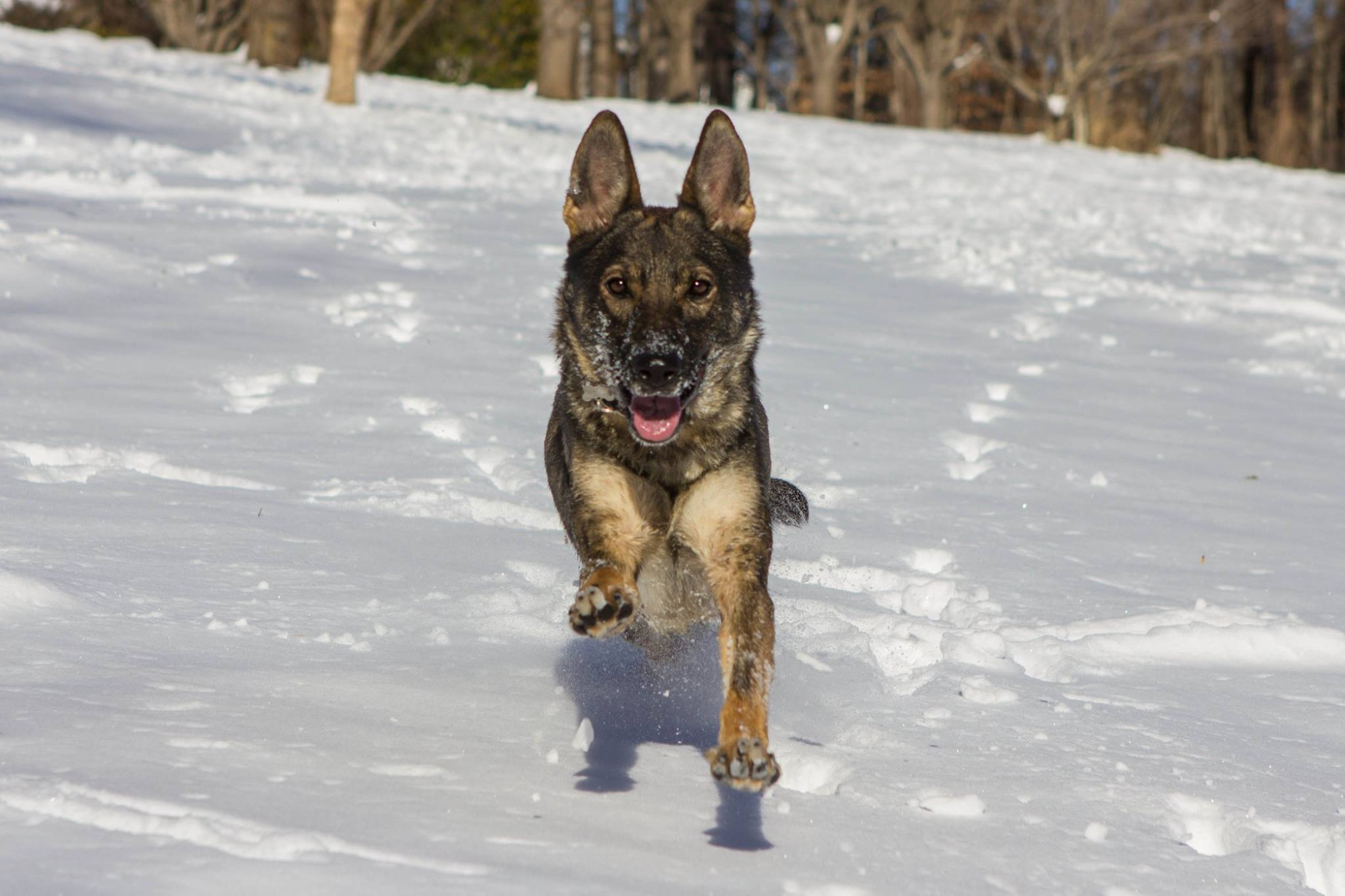 Karma at home in the snow