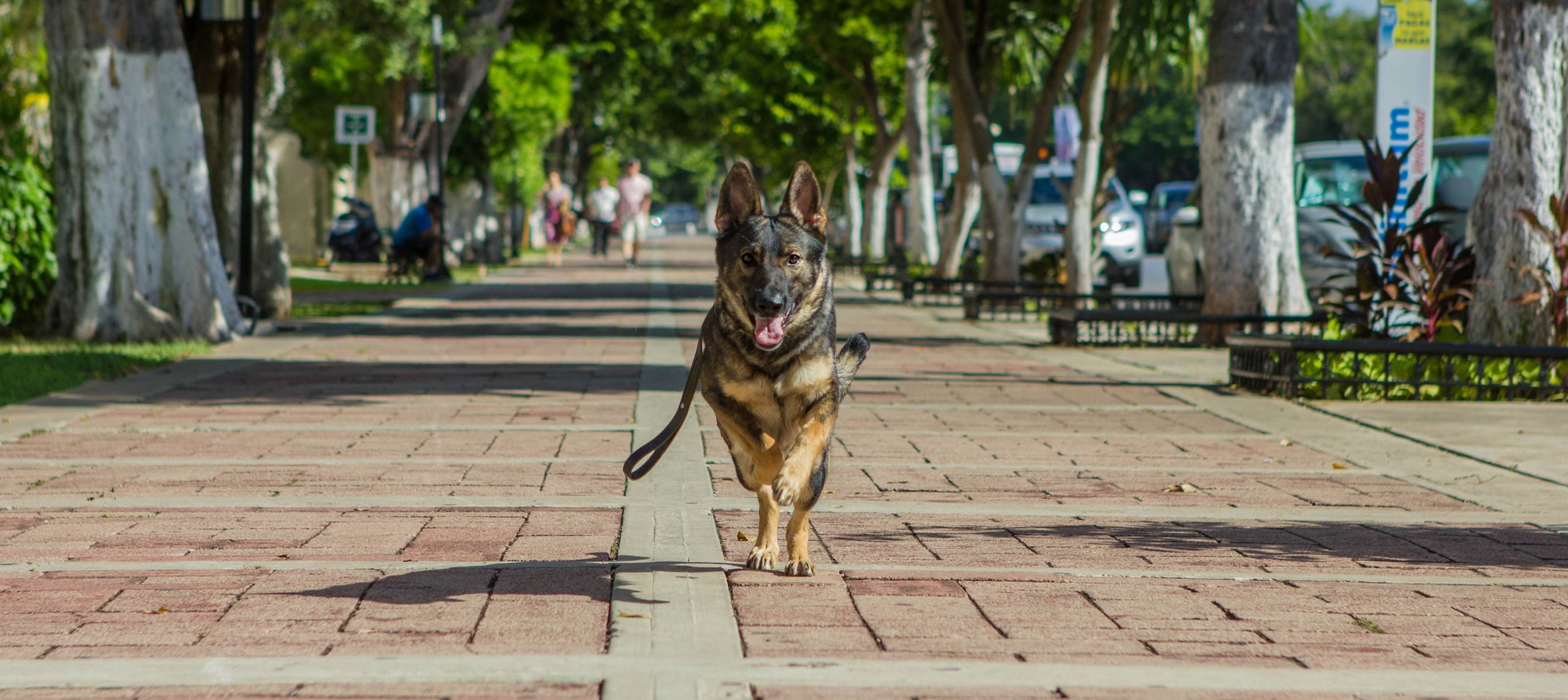 Karma in Merida Mexico