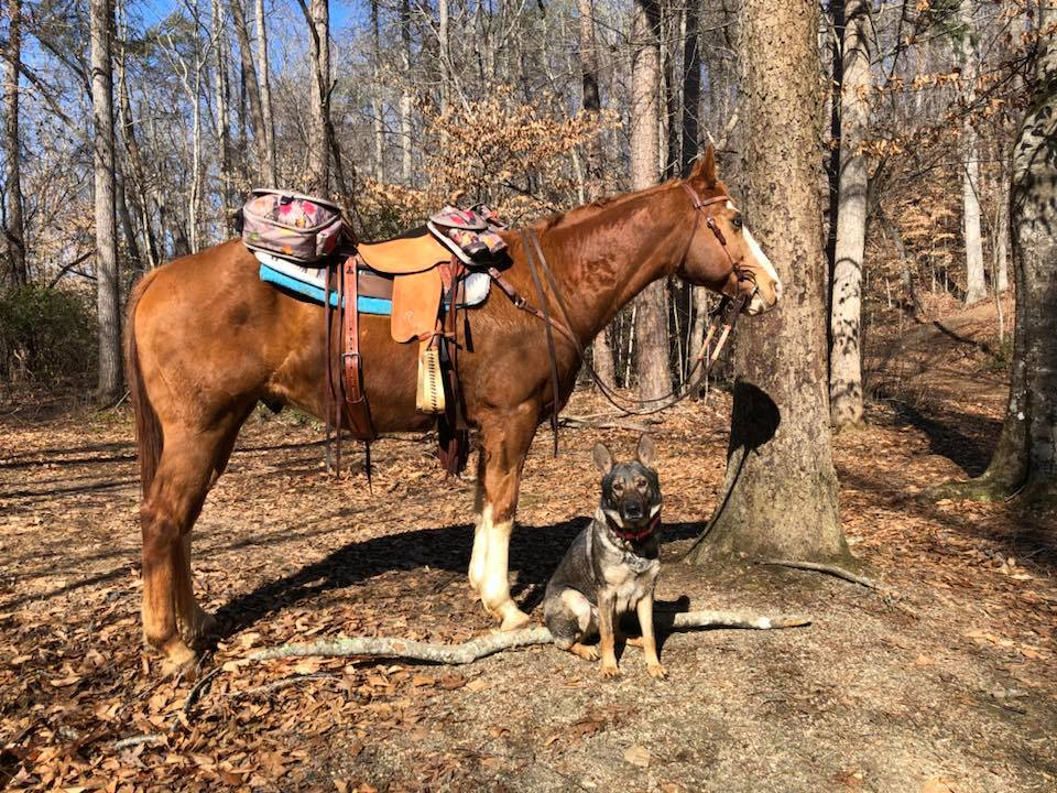 Karma waiting for me to mount up.