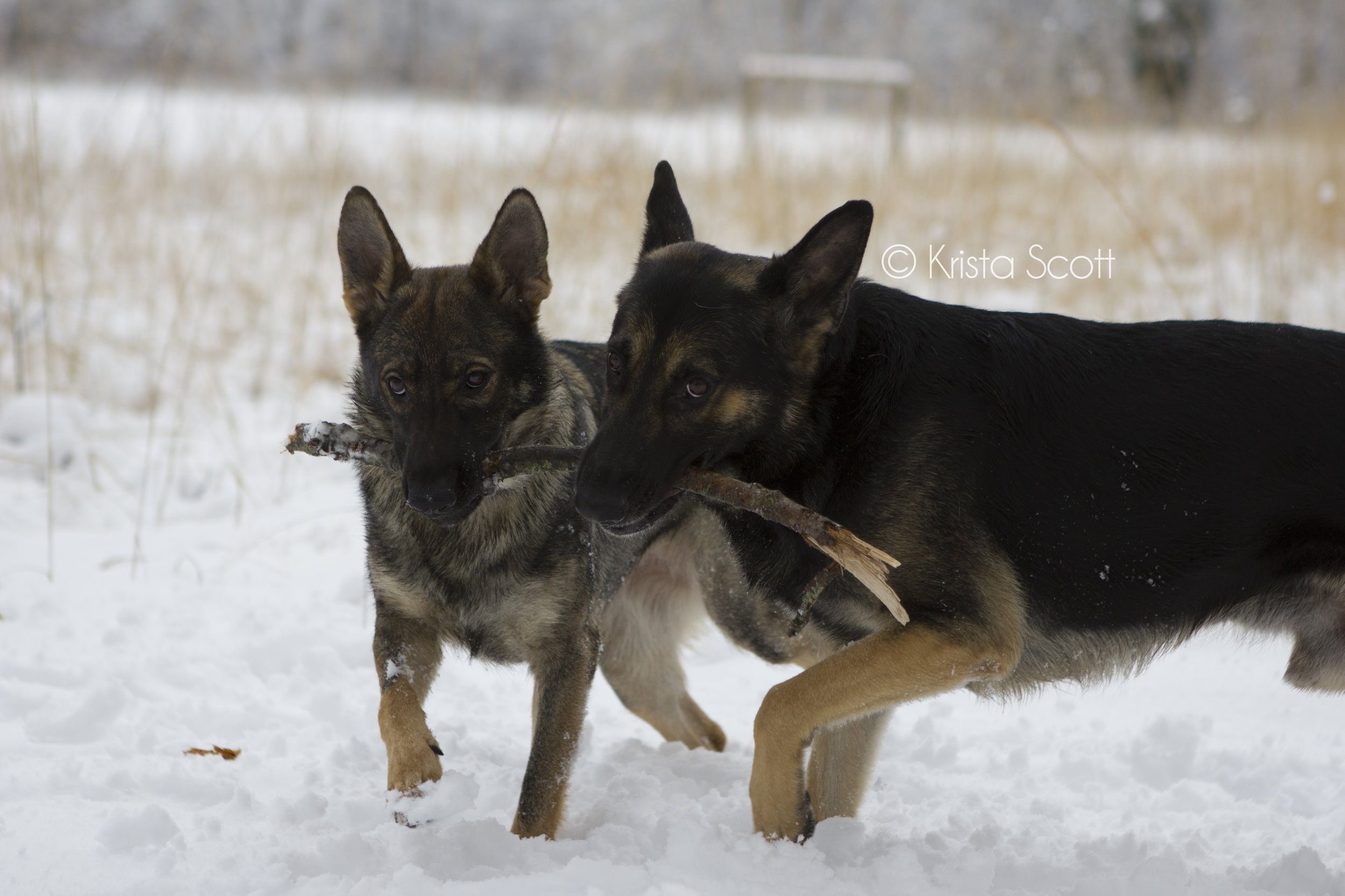 Karma as a puppy and Jonas