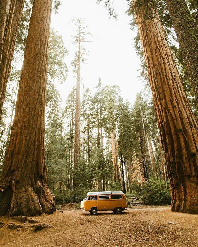 Livin' the dream⠀⠀⠀⠀⠀⠀⠀⠀⠀ @peteramend⠀⠀⠀⠀⠀⠀⠀⠀⠀ #adventure #rawcalifornia #california ⠀⠀⠀⠀⠀⠀⠀⠀⠀ #love #vanlife #instagramers