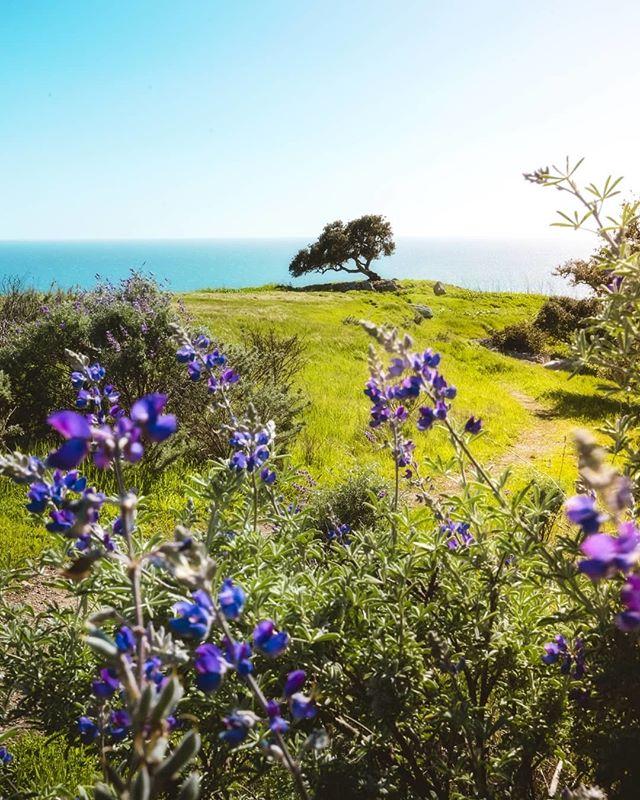 West coast love⠀⠀⠀⠀⠀⠀⠀⠀⠀ 📸: @the_californist⠀⠀⠀⠀⠀⠀⠀⠀⠀ #adventure #rawcalifornia #california ⠀⠀⠀⠀⠀⠀⠀⠀⠀ #love #westcoast