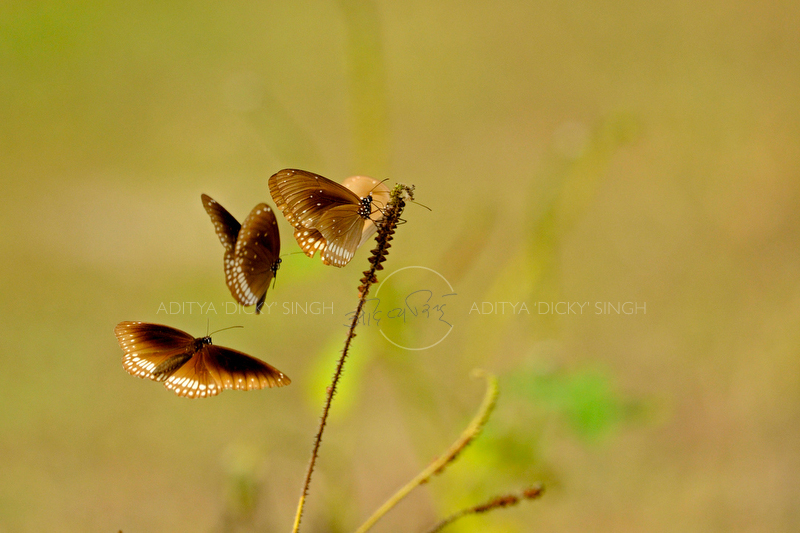 ADS_Sri-Lanka_000051934.jpg