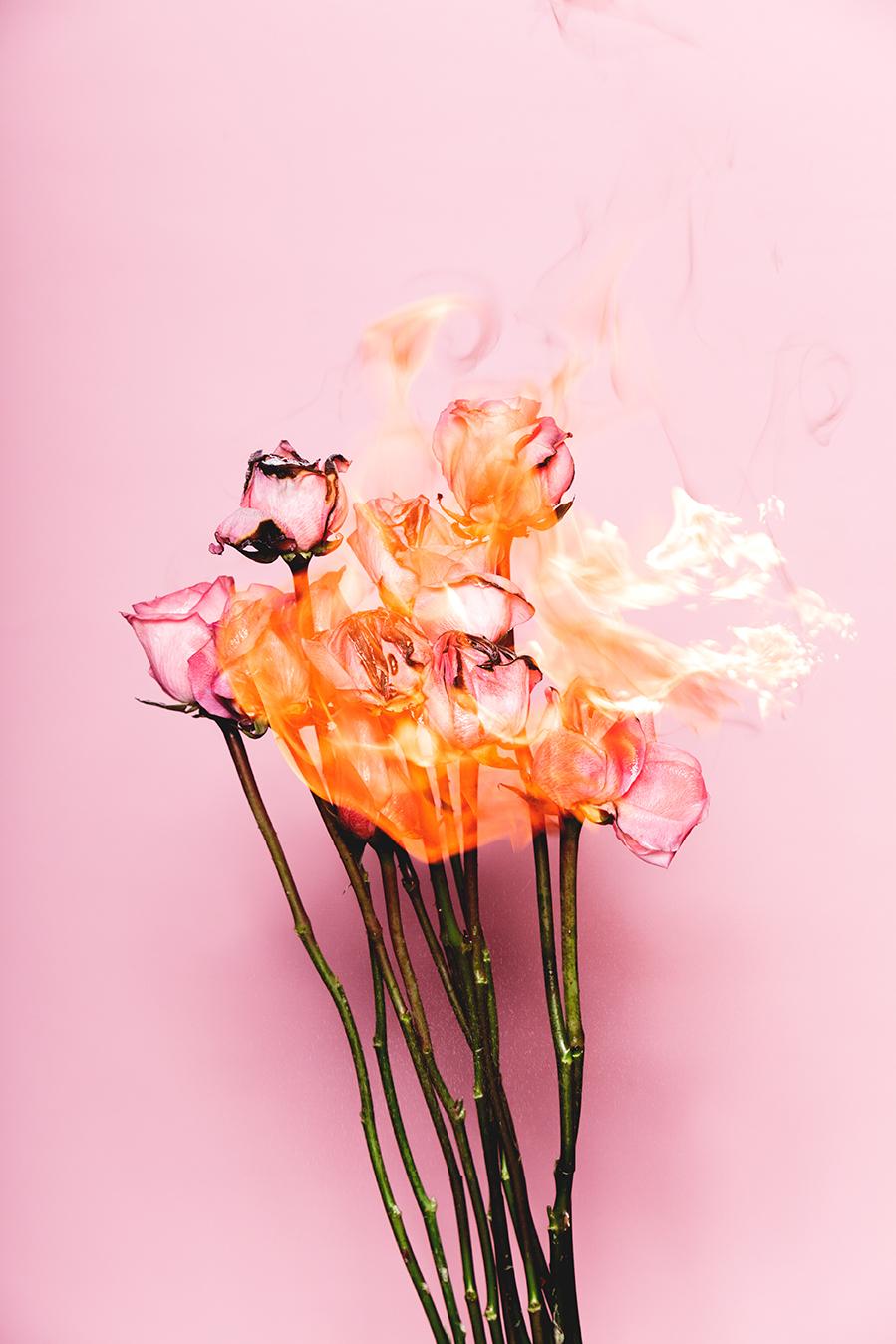 pinkroses_01_o.jpg