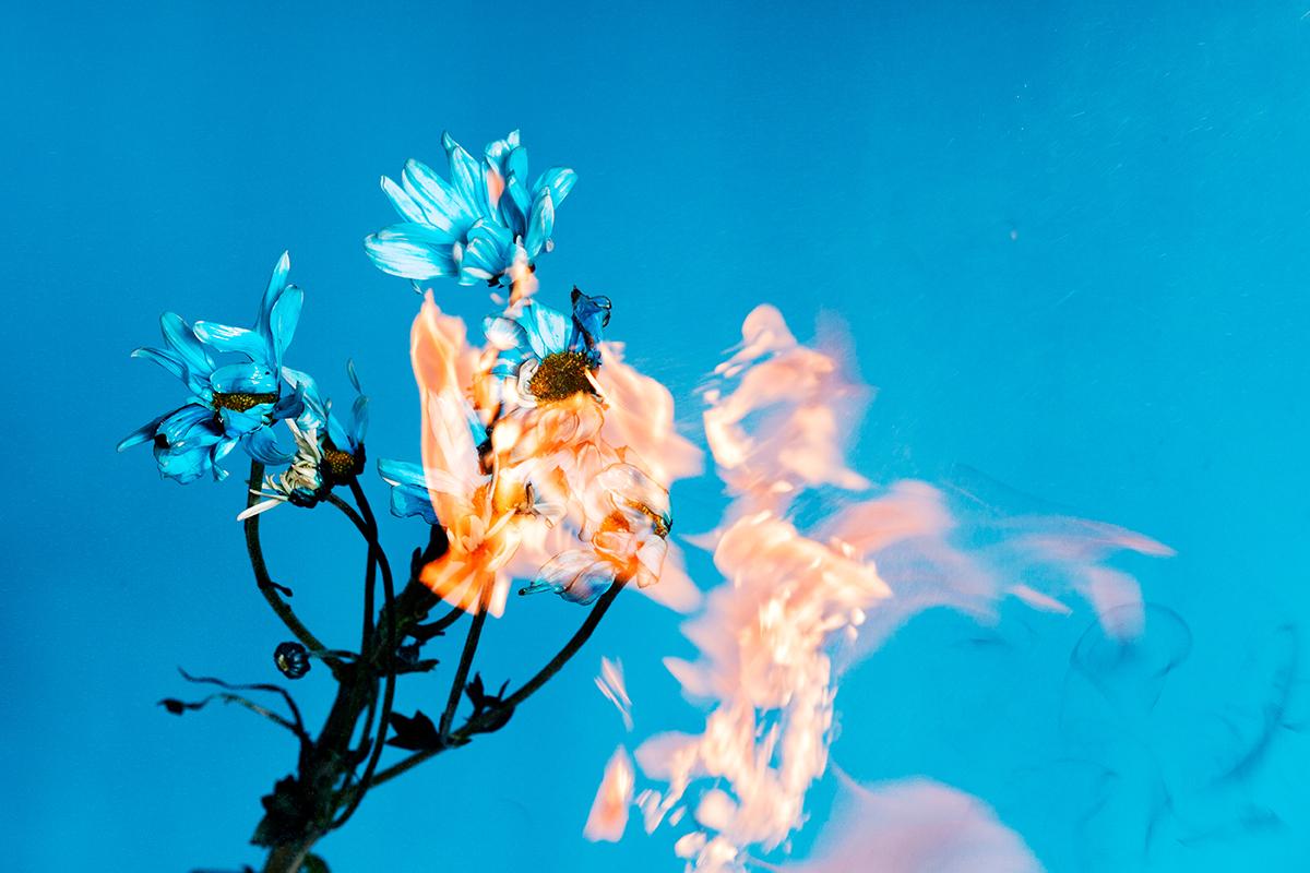 blueflowers_01_o.jpg
