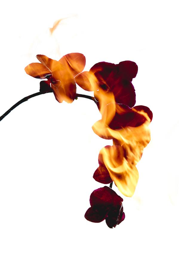 AnnieBuado_conditions_orchids_02.jpg