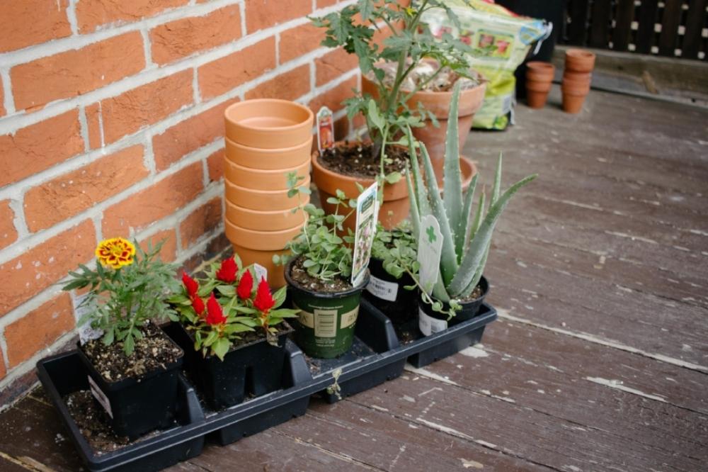 Benefits of Planting a Windowsill Garden OMC