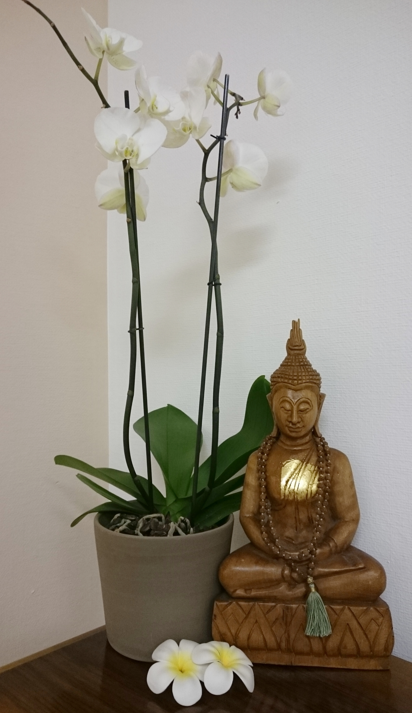 Copy of yoga geneva - vinyasa yoga power yoga - studio