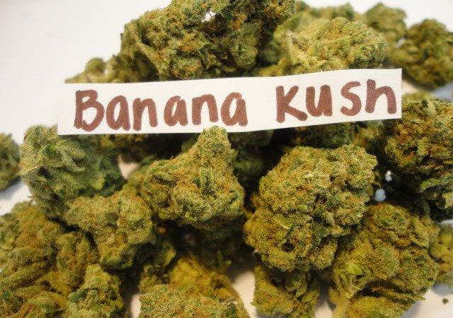Banana-Kush.jpg